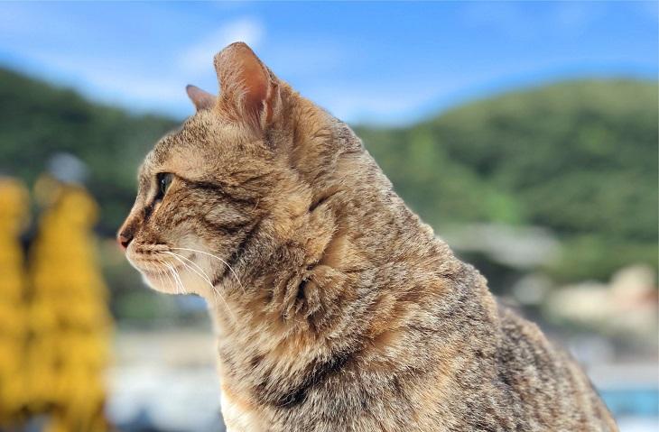 ラパッド地区の猫