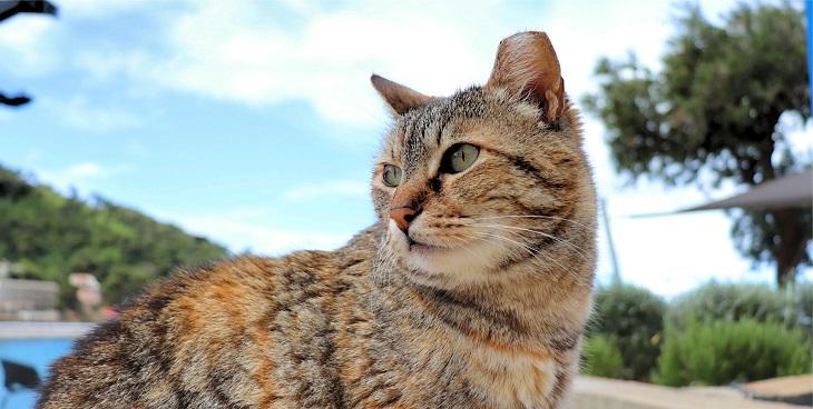 クロアチアの猫の街