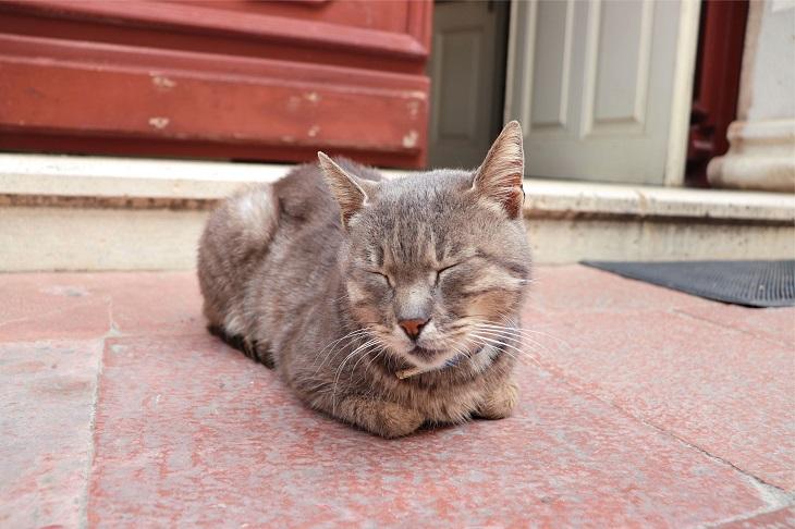 教会前の猫ちゃん