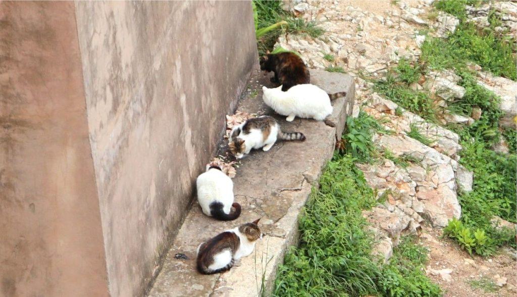 旧市街のたくさんの猫